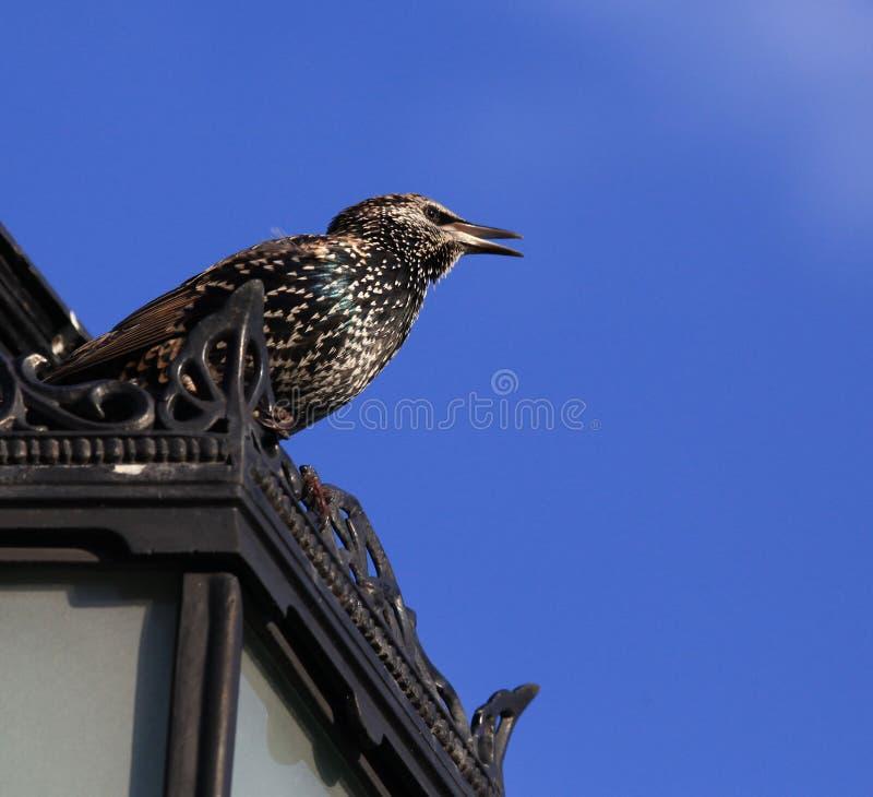 Un pequeño pájaro en un top del tejado foto de archivo