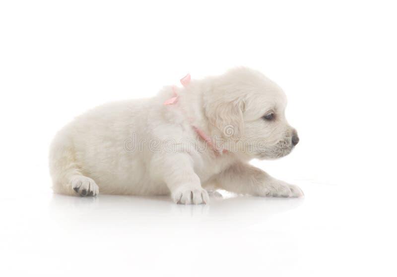 Un pequeño perrito lindo del perro imagenes de archivo