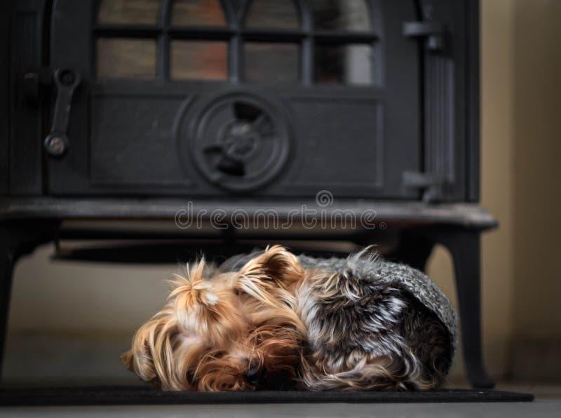 Un pequeño perro duerme cerca de la estufa en comodidad y calor fotografía de archivo libre de regalías