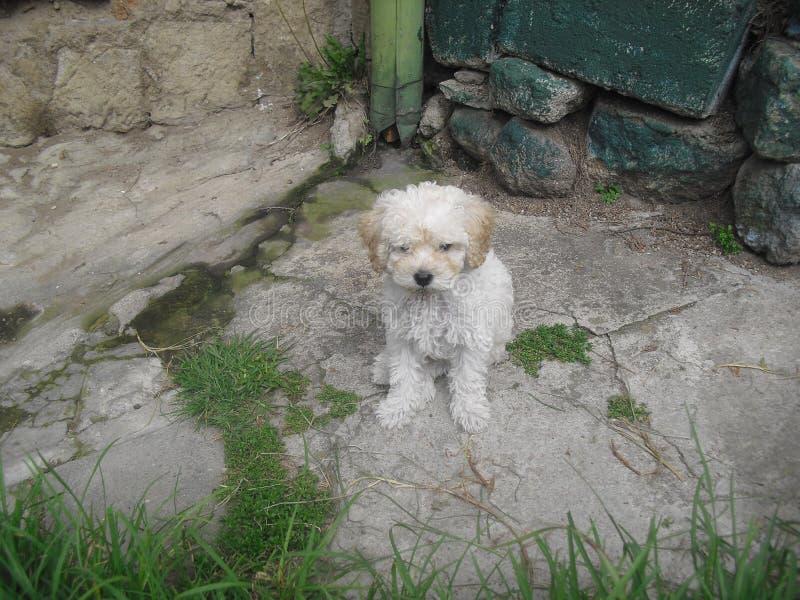 Un pequeño perro que toma una rotura foto de archivo libre de regalías
