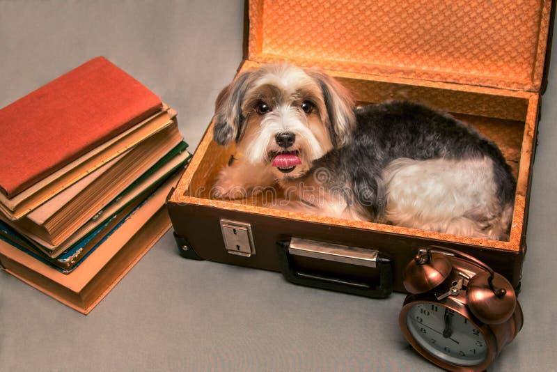 Un pequeño perro recoge un hogar de la maleta imagen de archivo