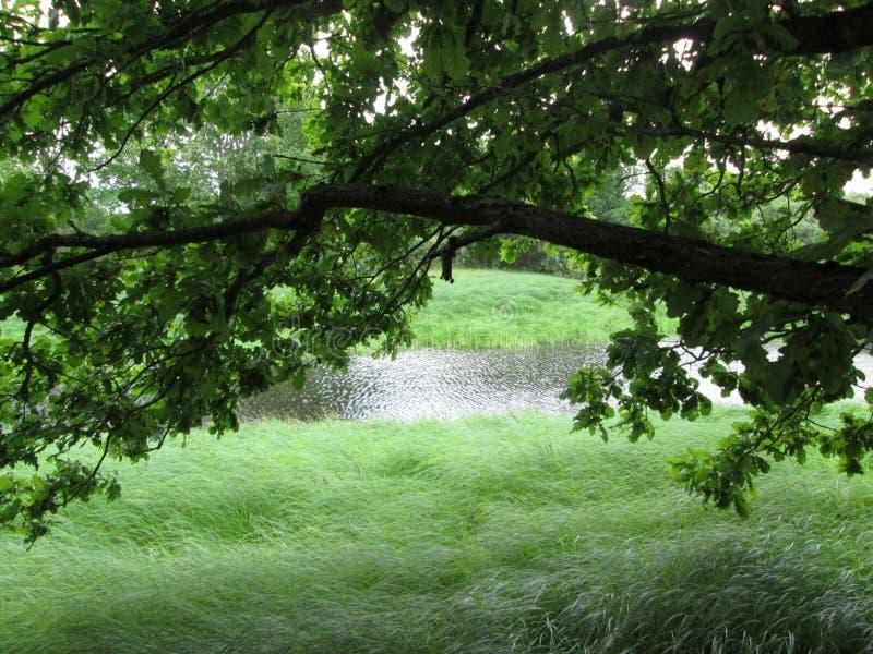 Un pequeño río con los bancos demasiado grandes para su edad de la hierba foto de archivo libre de regalías