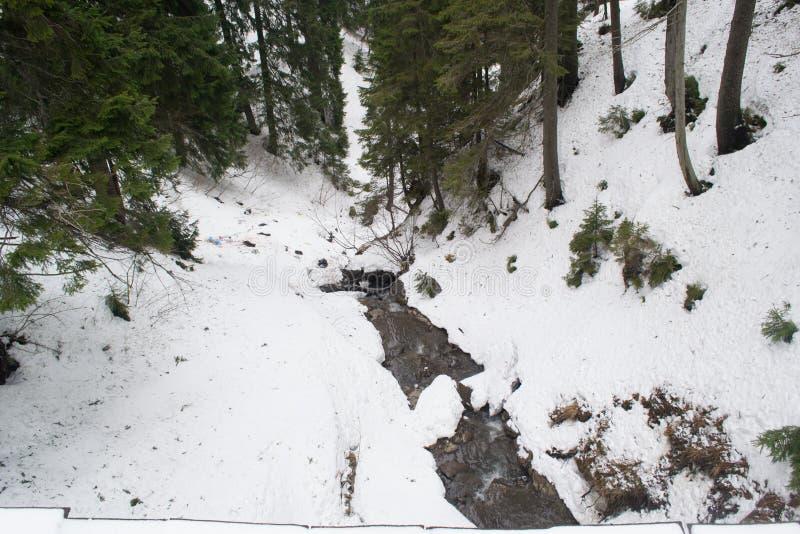 Un pequeño río de la montaña entre los abetos imagen de archivo