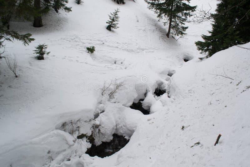 Un pequeño río de la montaña entre los abetos foto de archivo libre de regalías