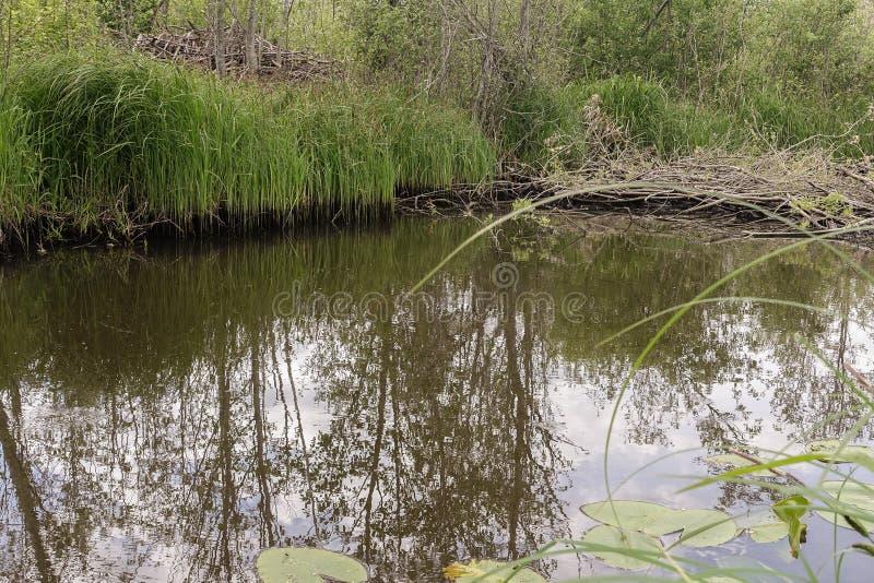 Un pequeño río en el campo y una hierba verde en ambos lados fotos de archivo