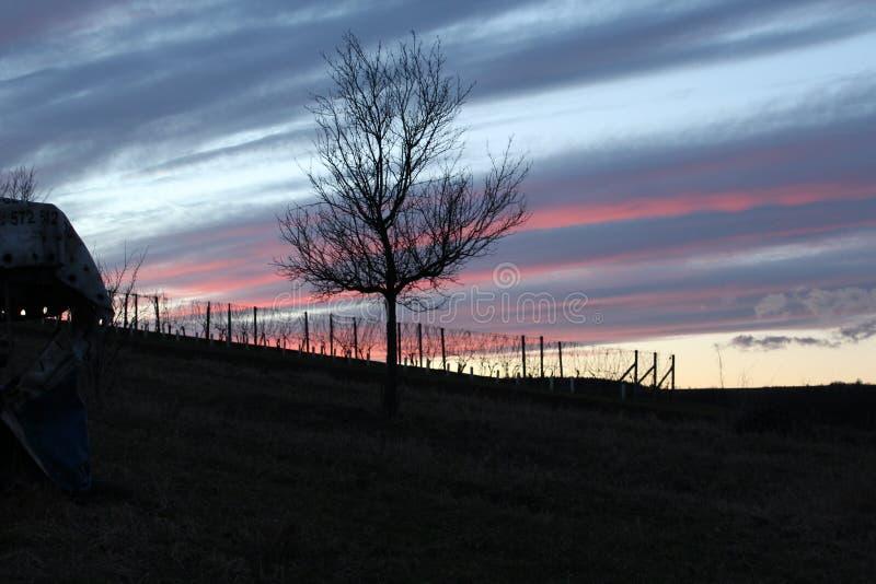 Un pequeño viñedo y un cielo mágico imagen de archivo