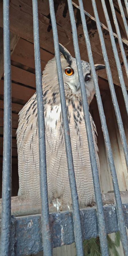 Un pequeño viaje al parque zoológico éste es el pájaro más dulce del mundo foto de archivo libre de regalías