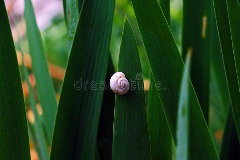 Un peque?o caracol blanco en hierba de color verde oscuro fotografía de archivo