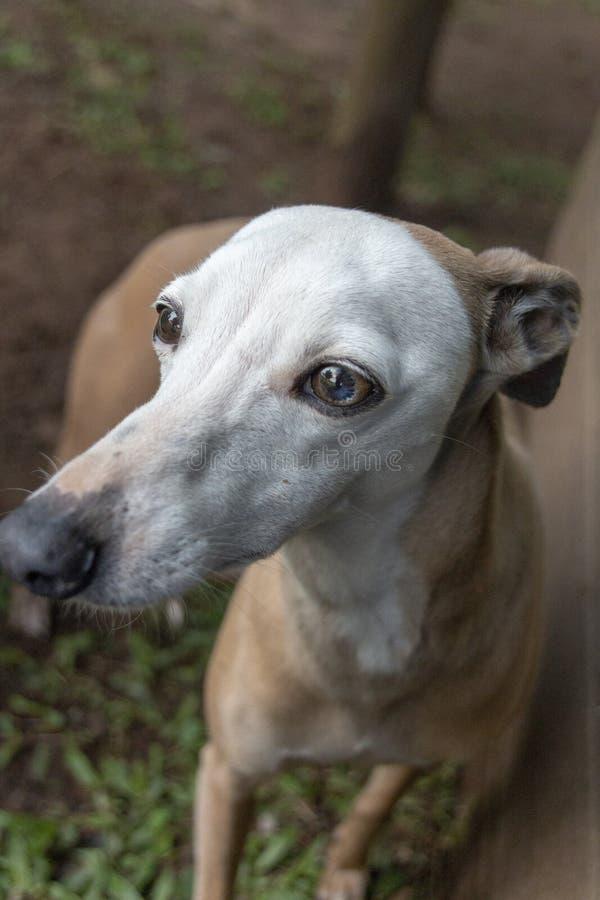 Un peque?o perro fotos de archivo libres de regalías