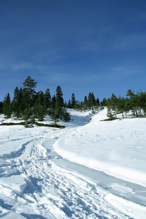 Un percorso alla foresta fotografia stock