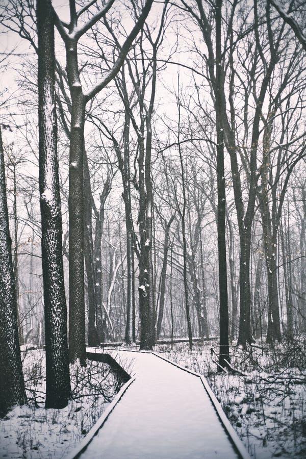 Un percorso boscoso coperto in neve immagine stock libera da diritti