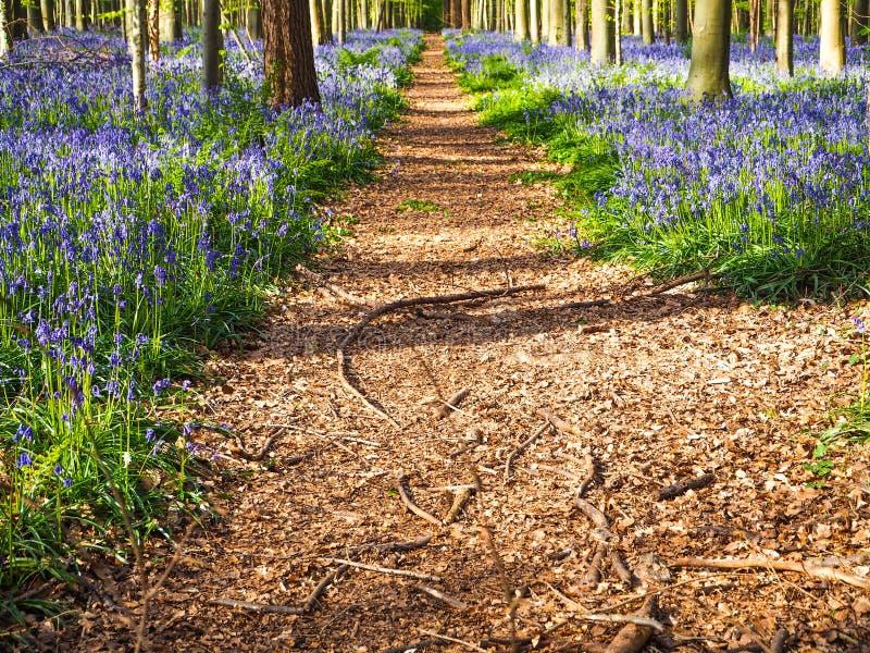 Un percorso diritto che conduce tramite un tappeto blu e porpora vibrante immagine stock libera da diritti