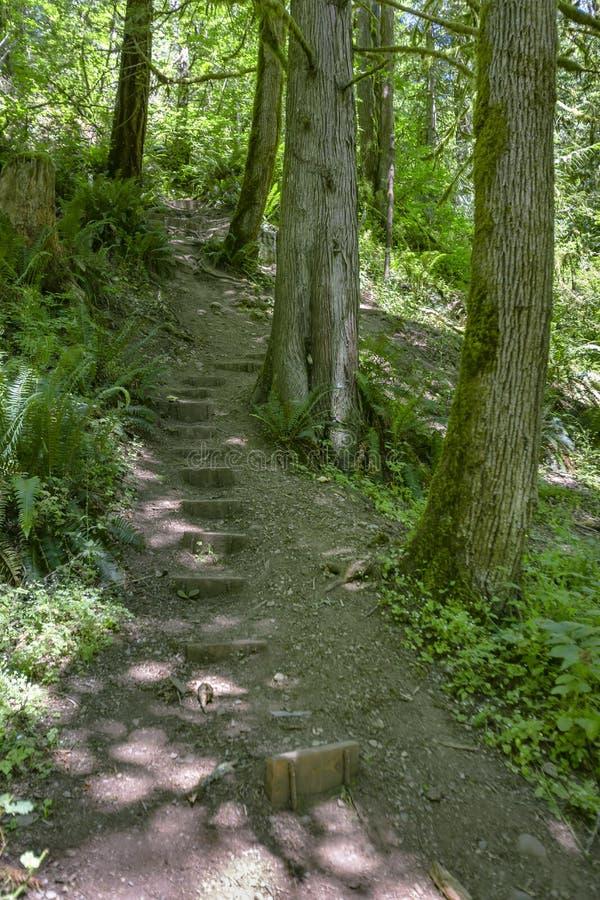 Un percorso nella foresta di verde leggiadramente con i blocchetti fare un passo nel lavaggio immagine stock