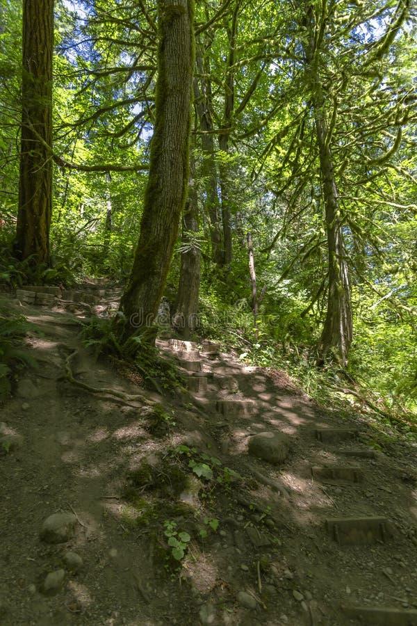 Un percorso nella foresta di verde leggiadramente con le pietre facenti un passo e gli alberi immagine stock libera da diritti