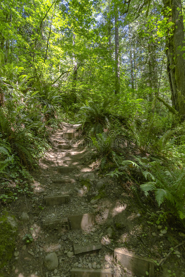 Un percorso nella foresta di verde leggiadramente con le pietre facenti un passo Washington immagini stock libere da diritti