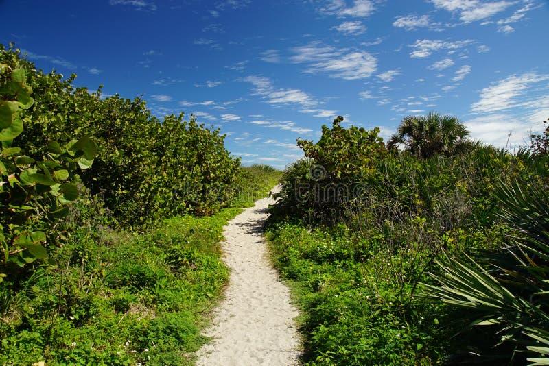 Un percorso tropicale sabbioso alla spiaggia fotografie stock