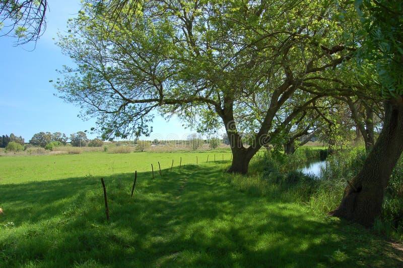 Un percorso verde lungo il fiume di Ciane fotografie stock