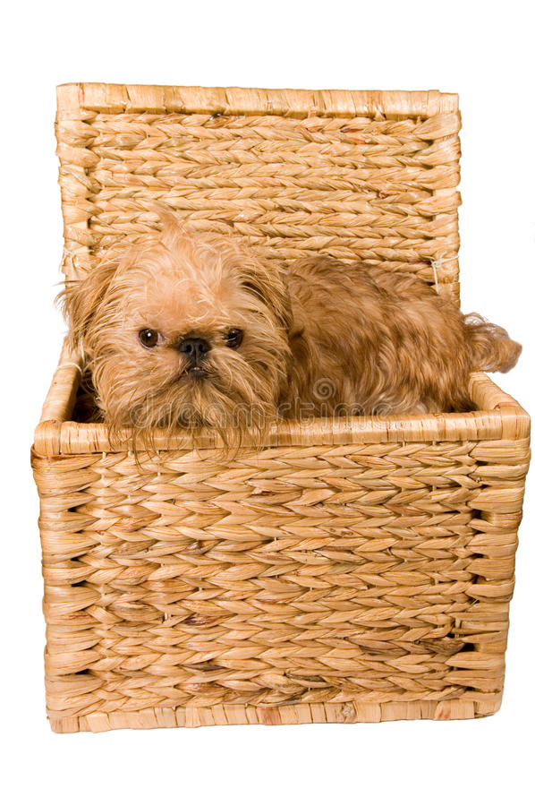 Un perrito está en un tronco. foto de archivo libre de regalías