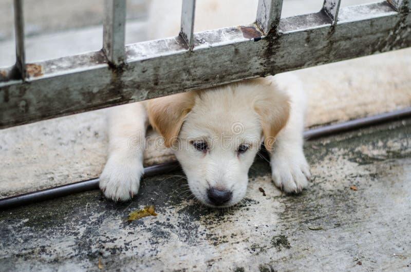 Un perrito lindo está jugando, la cara a través debajo de la cerca fotos de archivo