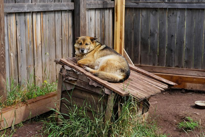 Un perrito lindo pone en el tejado de su perrera de madera imagen de archivo libre de regalías