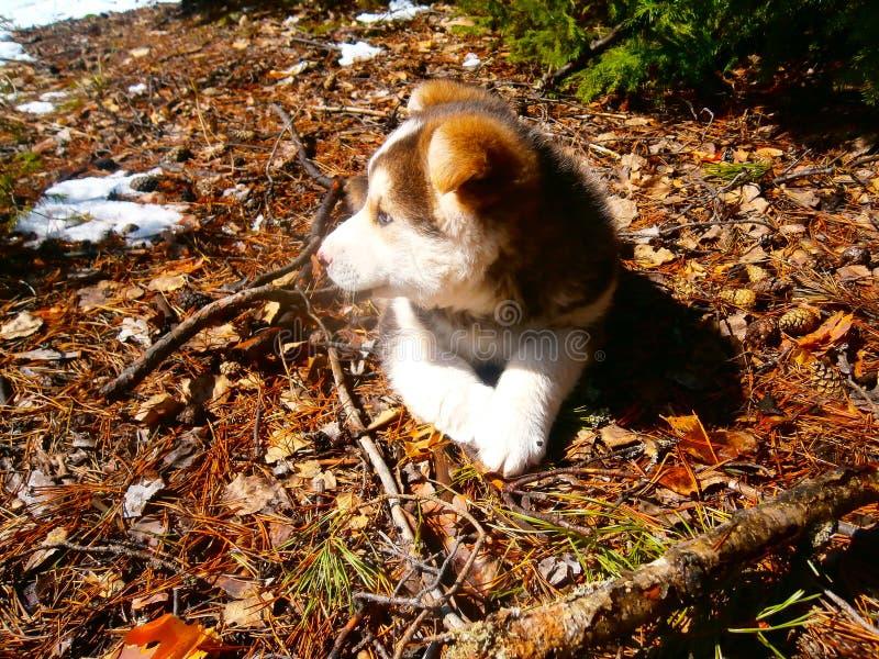 Un perro foto de archivo libre de regalías