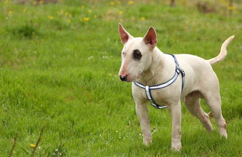 Un perro afuera imagen de archivo libre de regalías