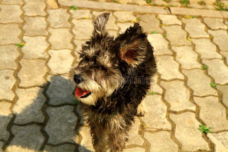 Un perro casero precioso (II) foto de archivo libre de regalías
