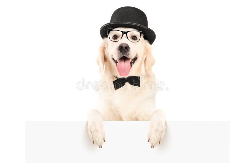Un perro con el sombrero que se coloca detrás de un panel blanco fotos de archivo libres de regalías