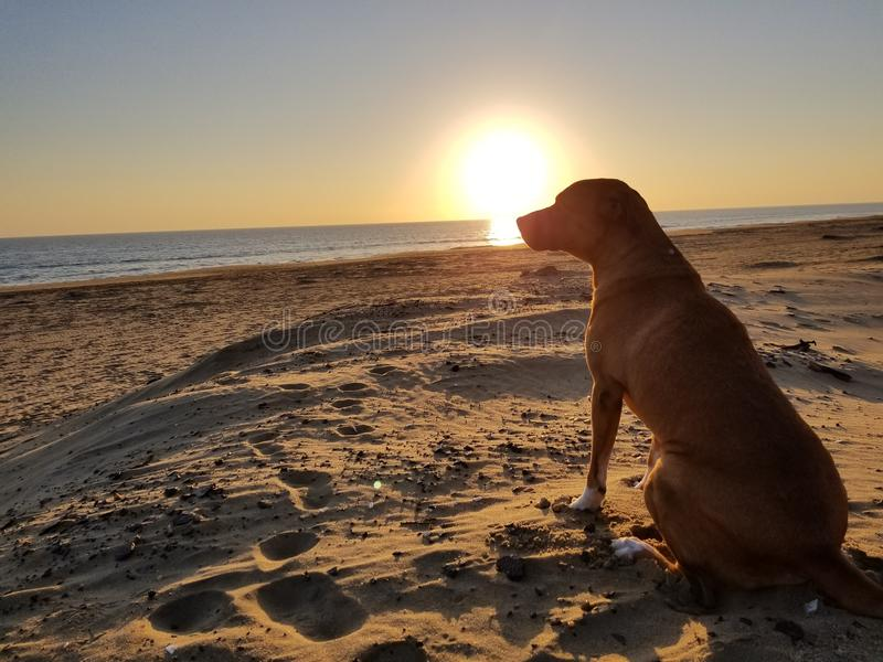 Un perro de pensamiento imagen de archivo