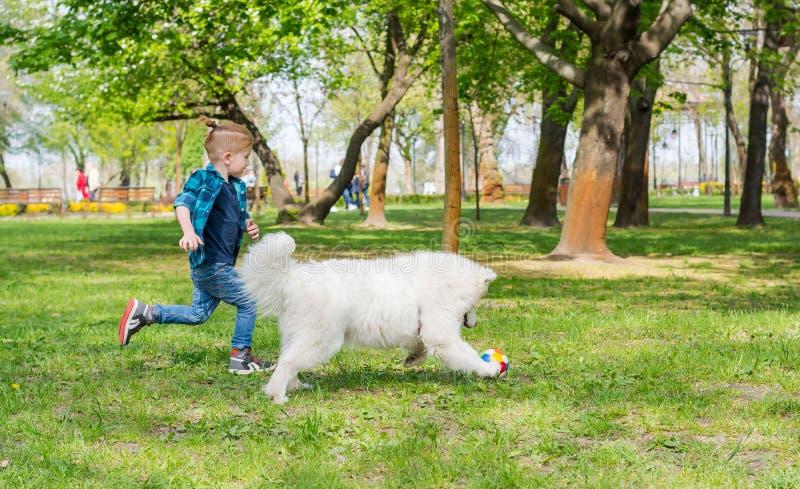 Un perro del samoyedo y un peque?o funcionamiento del inconformista a trav?s del parque en la hierba en primavera imágenes de archivo libres de regalías