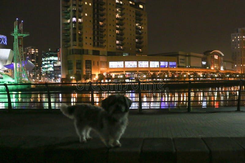 Un perro delante de Manchester, vista nocturna de Lowry imágenes de archivo libres de regalías