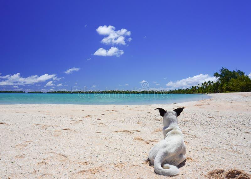 Un perro descansa en una playa de arena cerca de una laguna tropical rodeada de palmeras en una isla fotografía de archivo libre de regalías