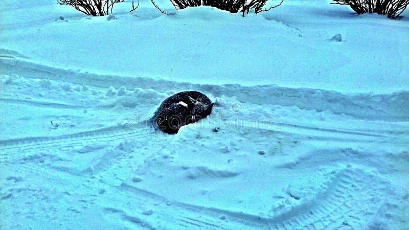Un perro el dormir en la nieve imagen de archivo