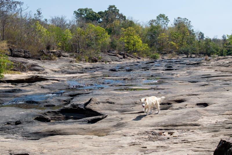 un perro en el río secado fotos de archivo