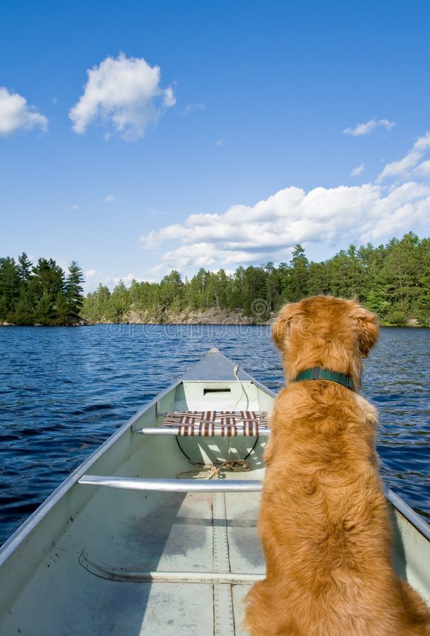 Un perro en su canoa. fotos de archivo