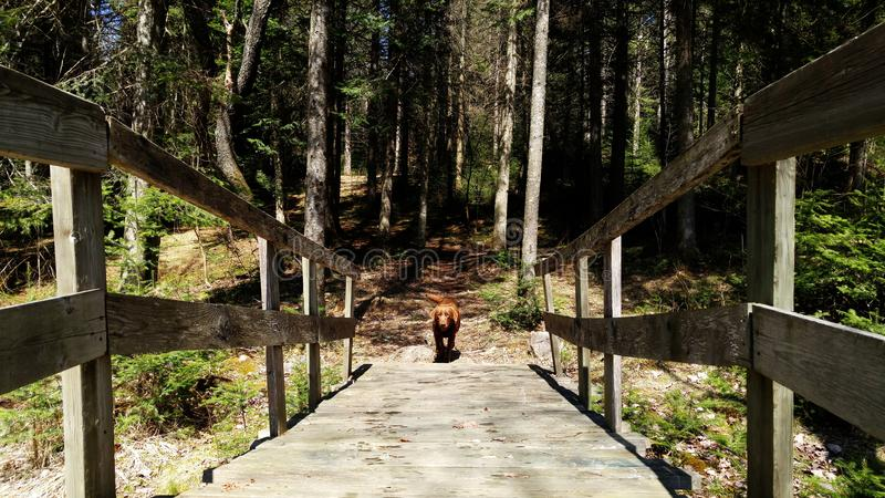 Un perro en un puente imagen de archivo libre de regalías