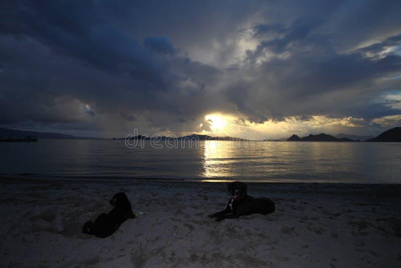 Un perro feliz y jugar corriente del mar en la playa con puesta del sol imagen de archivo