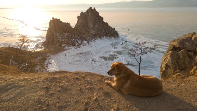 Un perro grande perdido que miente en el cabo de Burkhan que pasa por alto al chamán de la roca y que mira al lado Puesta del sol imagenes de archivo