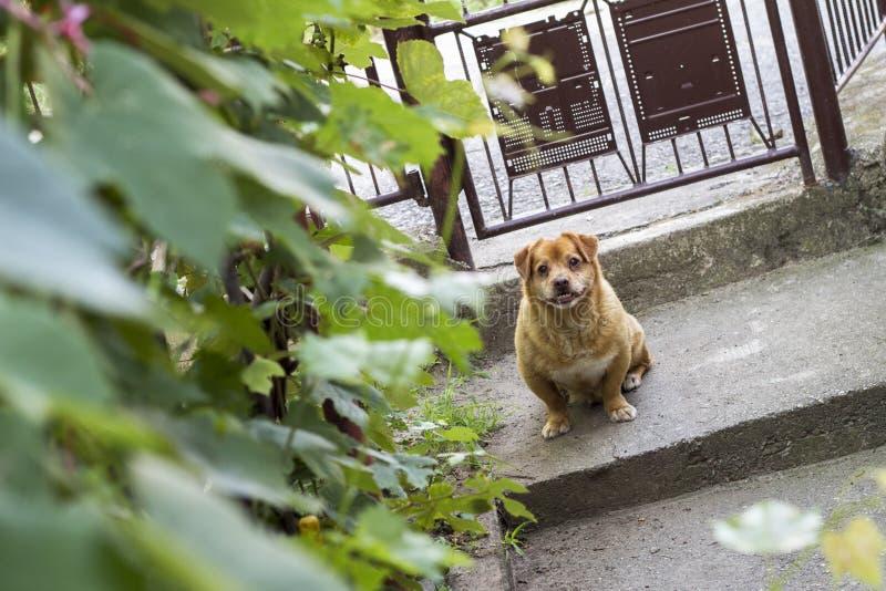 Un perro hermoso parece confuso en la cámara imagen de archivo