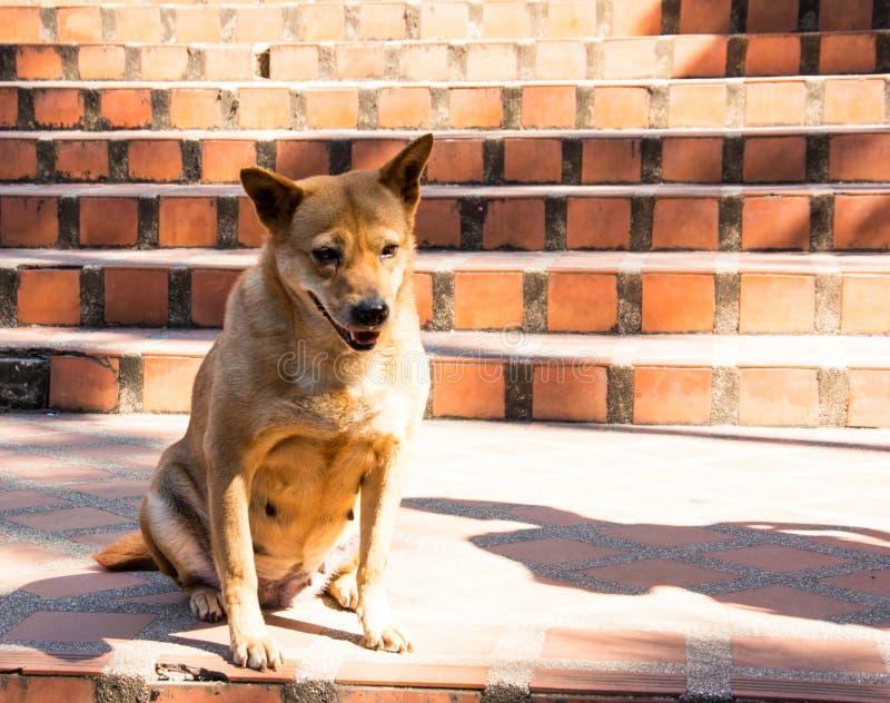 Un perro marrón que se sienta en las escaleras de una piedra de la naranja En un día frío fotos de archivo