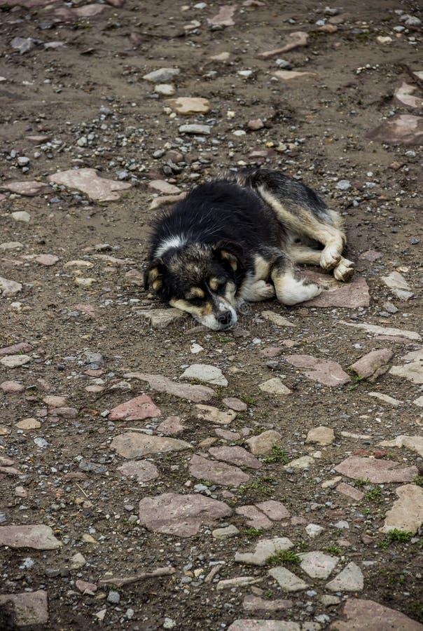 Un perro mestizo fotos de archivo libres de regalías