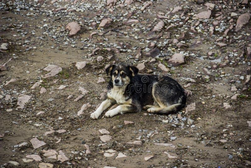 Un perro mestizo fotografía de archivo libre de regalías