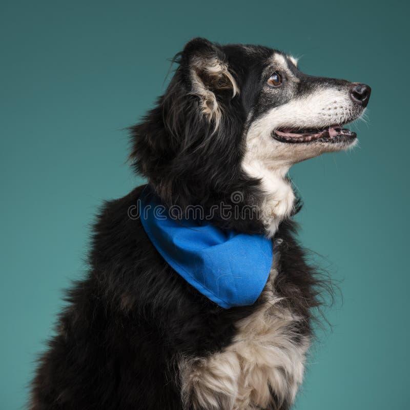 Un perro negro en el estudio fotografía de archivo libre de regalías