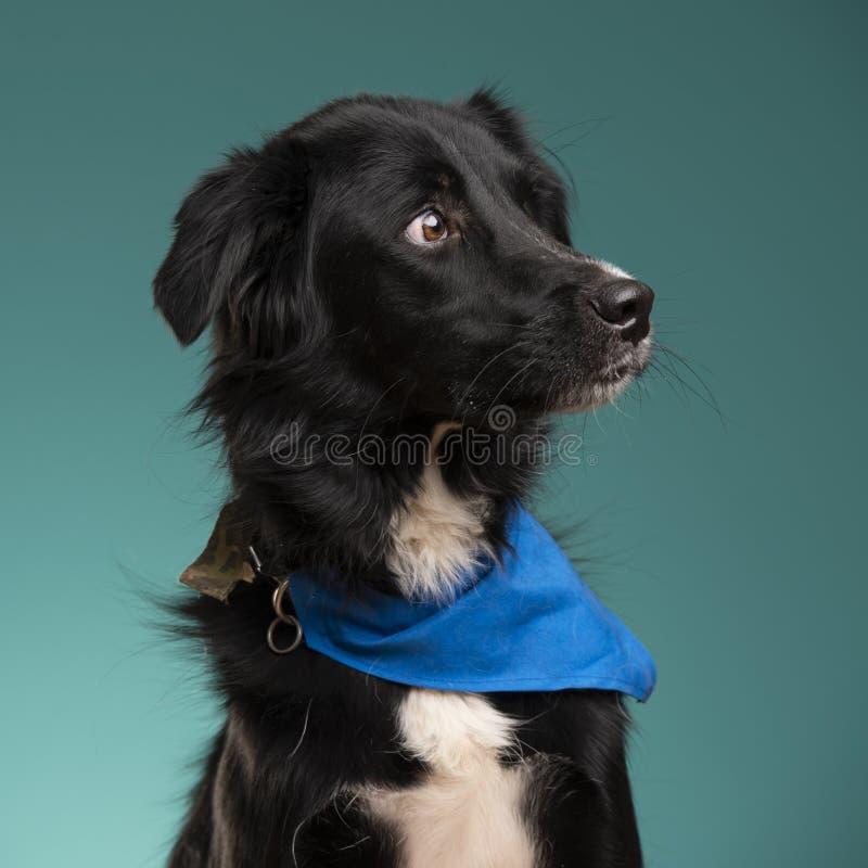 Un perro negro en el estudio foto de archivo libre de regalías