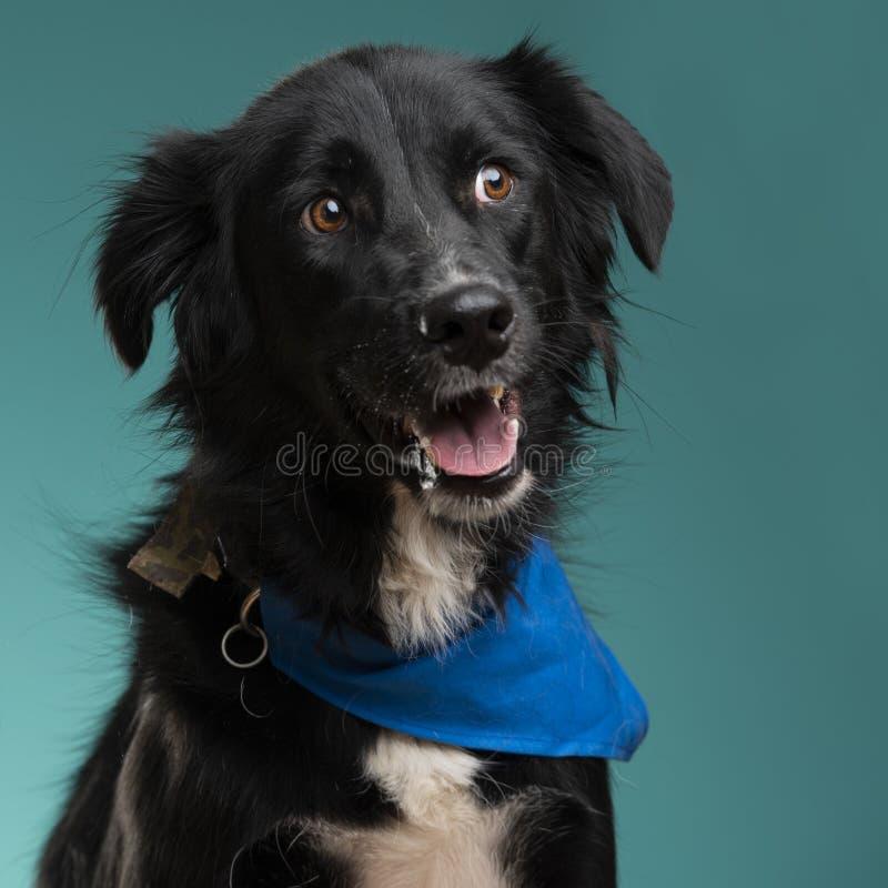 Un perro negro en el estudio fotografía de archivo