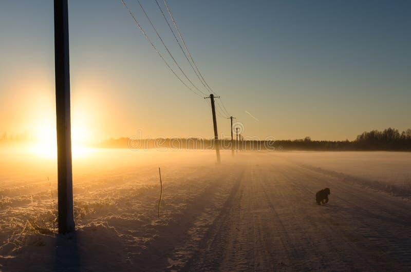 Un perro negro que camina en un camino nevoso como sol de oro brillante comienza a fijar fotografía de archivo libre de regalías