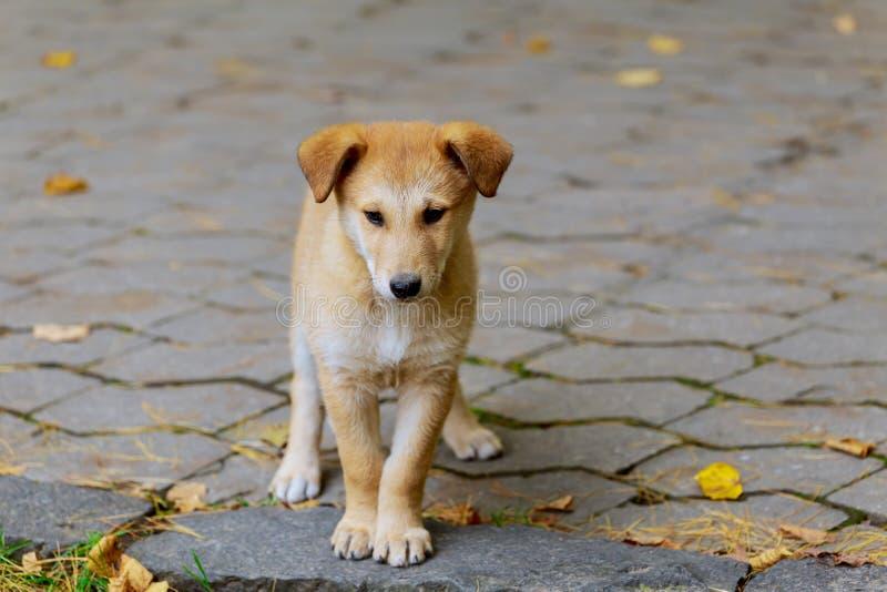 Un perro perdido abandonado, sin hogar se está colocando en la calle Poco triste, foto de archivo