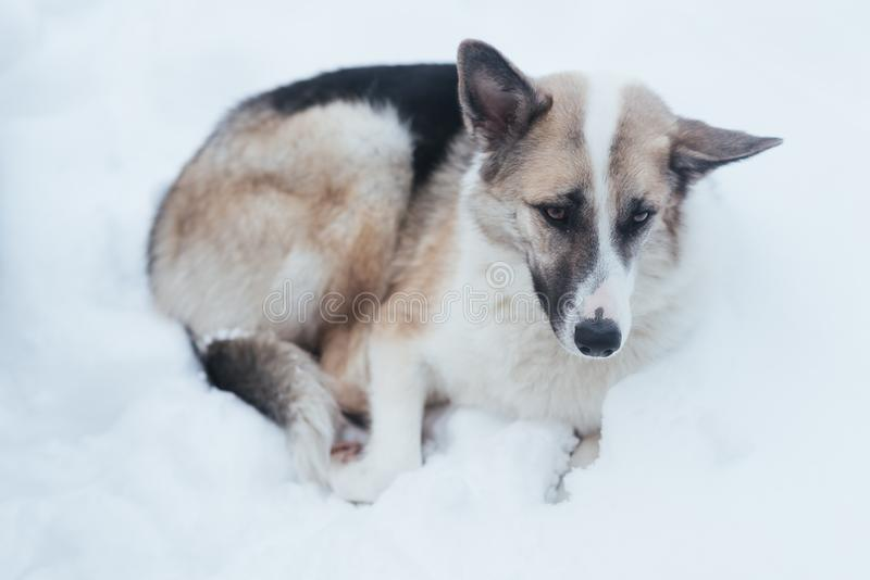 Un perro perdido triste está mintiendo en la nieve foto de archivo