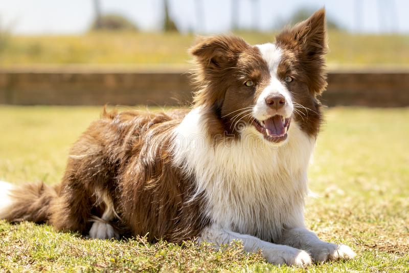 Un perro que descansa en la hierba imagen de archivo