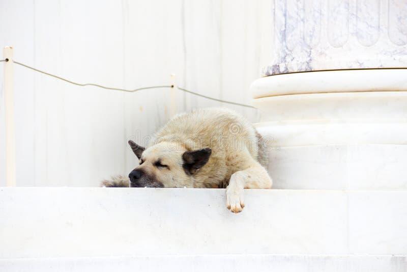 Un perro que duerme en los pasos de la biblioteca de Hadrian's fotografía de archivo